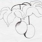 Cómo cultivar fruta de la pasión deliciosa