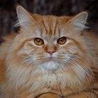 Cómo curar los estornudos de tu gato con remedios caseros