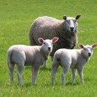 ¿Qué dice la Biblia sobre el tratamiento hacia los animales?