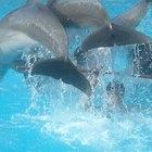 Como os golfinhos acasalam?