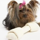 Cómo entrenar a tu pequeño cachorro yorkie miniatura para que defeque