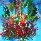 Como limpar plantas artificiais de aquário