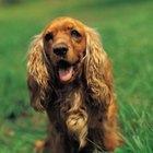 Cómo ayudar a tu perro a detener la picazón y el rascado excesivo