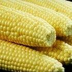 Como fazer etanol de milho?