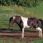 ¿Cuál es el mejor alimento para tu caballo?