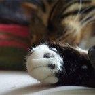 Doenças nas patas dos gatos