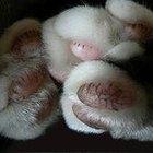 Como tratar um ferimento na almofada da pata de um gato