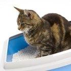 Cómo detener a un gato para que no orine en una alfombra