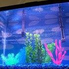Como determinar a quantidade de cascalhos que um aquário precisa?