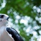 Leyes de animales en peligro de extinción