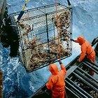 Como funcionam as armadilhas de caranguejo do Alasca?