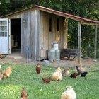 Cómo diseñar un gallinero