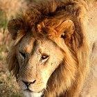 Animales europeos en peligro de extinción