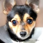 Costo de una cirugía de rodilla para perro