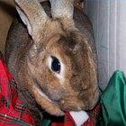 Cómo cuidar a un conejo doméstico
