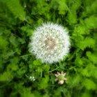 El mejor momento del día para aplicar el herbicida