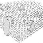 Como fazer uma membrana celular de isopor