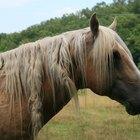 Listagem de doenças de pele em cavalos