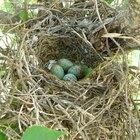 Identificación de los huevos de aves