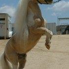 Información sobre el caballo miniatura