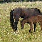 Doenças reprodutivas em cavalos