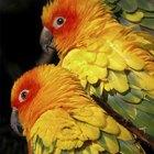 Como tratar piolhos de aves em humanos