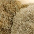 Cómo limpiar la piel de conejo en el hogar