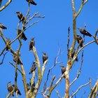 Como deshacerte de los pájaros de tus árboles