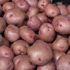 Cómo preparar semillas de patata
