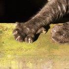 Cómo evitar que un gato arañe los muebles de cuero