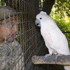 Cómo hacer un aviario para pájaros con tubos de PVC