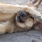 Cómo enseñar a tu perro a obedecer y hacer trucos