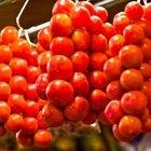Cómo identificar las enfermedades de la planta de tomate