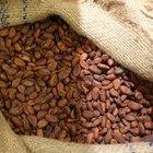Cómo fermentar los granos de cacao