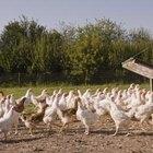 Cómo aprender a construir gallineros