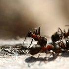 Cómo mantener a las hormigas lejos del cuenco de comida del perro