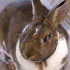 Cómo hacer una jaula para tus conejos