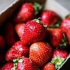 Cómo hacer extracto de fresa