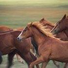 Cómo ganar el respeto de un caballo