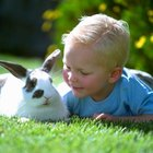 Cómo acariciar a un conejo
