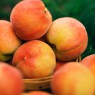 Ripe peaches in a bowl on wooden background