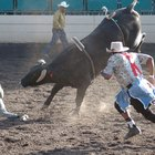 What Is the Second Rope on a Bull For?