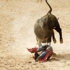 Bull Riding Events in North Carolina