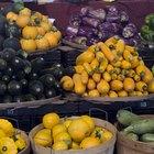 cultivation of fruits of passion, granadilla