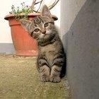 Tratamento à base de Terramicina para felinos