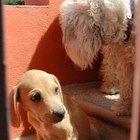 Tratamiento para las llagas en los codos de los perros
