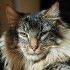 Medicação para estômago para gatos