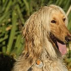 El uso de albendazol en perros