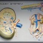 Quais são as causas de dilatação da pelve renal?