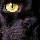Você pode usar colírio humano em gatos?